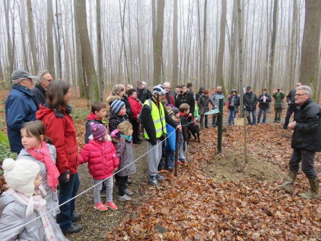 2016-Steinberg-Plantation-07-1024x768